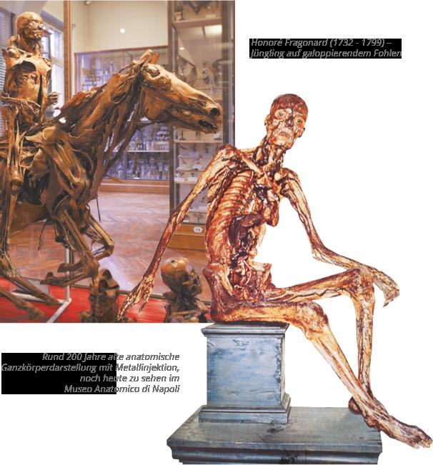 Geschichte der Anatomie - Körperwelten