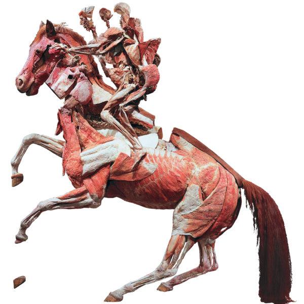 Das scheuende Pferd mit Reiter