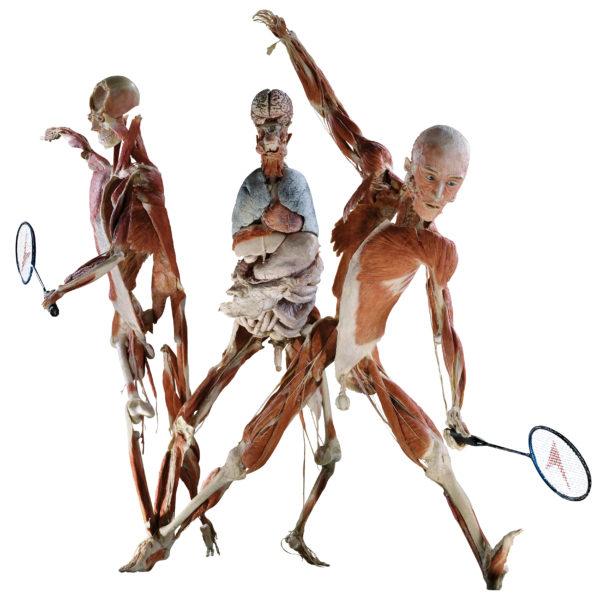 Der Badmintonspieler