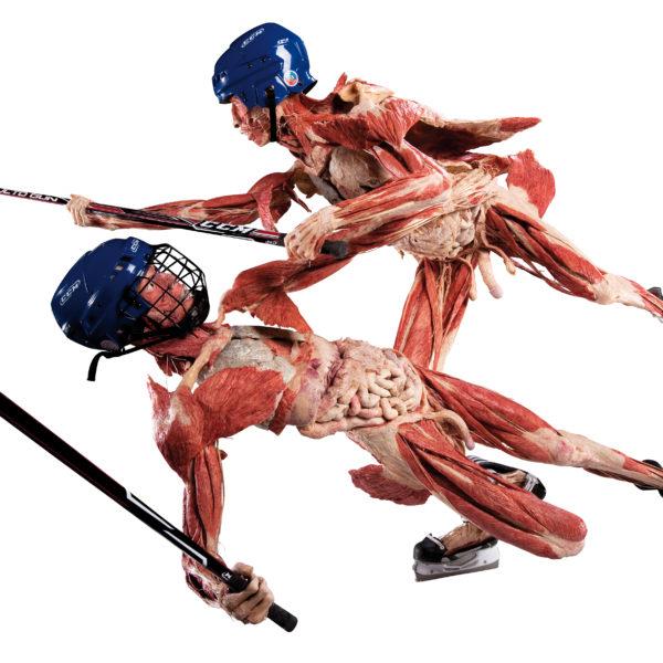 Die Hockey-Spieler
