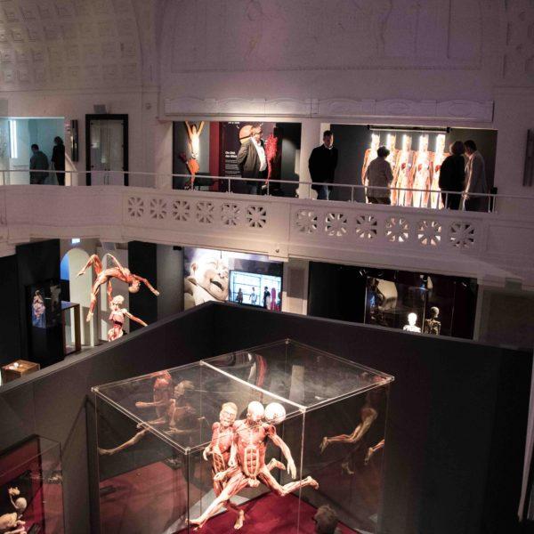 Blick in die KÖRPERWELTEN Ausstellung